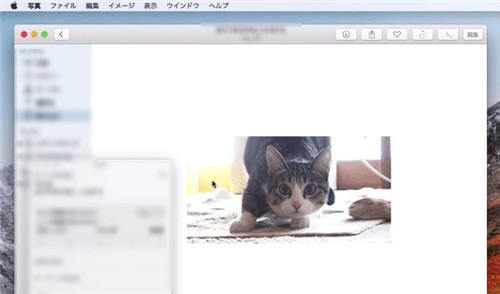 Mac GIF再生
